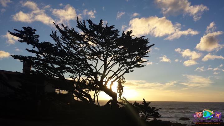 Vegetação típica de Carmel com pôr do sol ao fundo